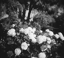 Nana's Garden 2 by Christie Harvey