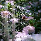 Garden Wonder by saseoche