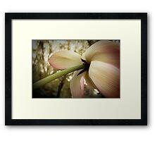 Lotus Stem Framed Print