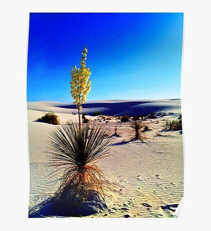 White Sands Yucca Poster