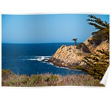 Point Lobos' Solitary Cypress Poster