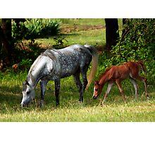 Motherhood Photographic Print
