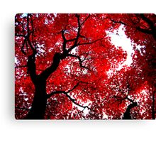 Red Autumn Leaves at Himeji Canvas Print
