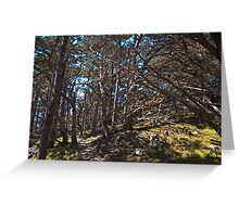 Cypress Grove Trail, Point Lobos, California Greeting Card