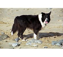 At the seaside  with Indy Photographic Print