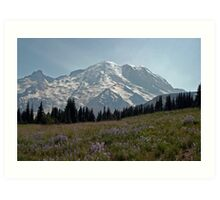 Wildflowers at Mount Rainier Art Print