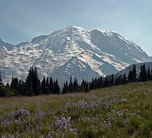 Wildflowers at Mount Rainier by Olga Zvereva