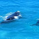 'Southern Right Whales' by Ian Berry