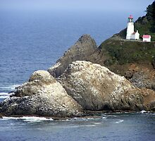 Heceta Head by Rhonda  Thomassen