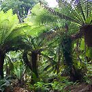 A Ferny Grove by Gethin