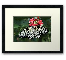 Nature Photography Pretty Black and White Butterfly Framed Print