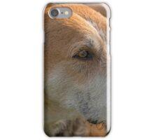 Fox Hound (4) iPhone Case/Skin