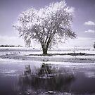 Cloudtree by Nikki Trexel