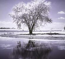 Cloudtree by Nikki Moore