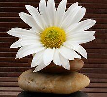 Zen Spa Daisy Meditation Tower by JostaBerry