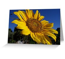 Greet the Day Greeting Card