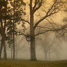 Morning Fog by Cricket Jones