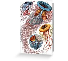 Haeckel Jellyfish Greeting Card
