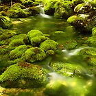 Bohinj - Slovenia by Michael Olive