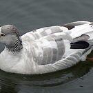 Goose by AARDVARK