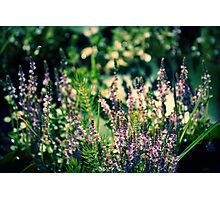 Forestier  Photographic Print