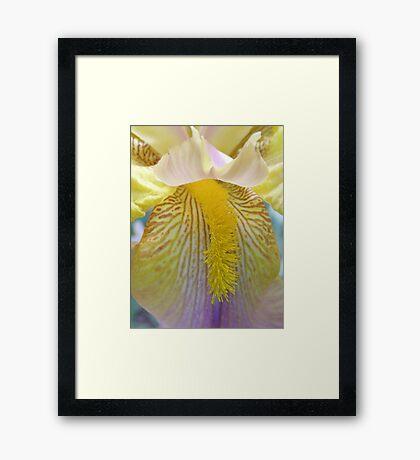 Iris! Framed Print