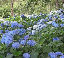 blue flowers, by 11 year old Basti by Teresa Schultz