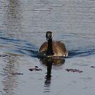 Canadian Goose by SpiritFox