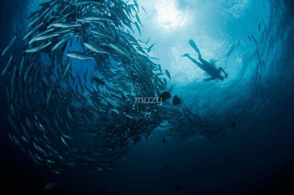 Schooling Jacks and Diver by muzy