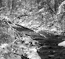 March snow on Pike Creek II by nastruck