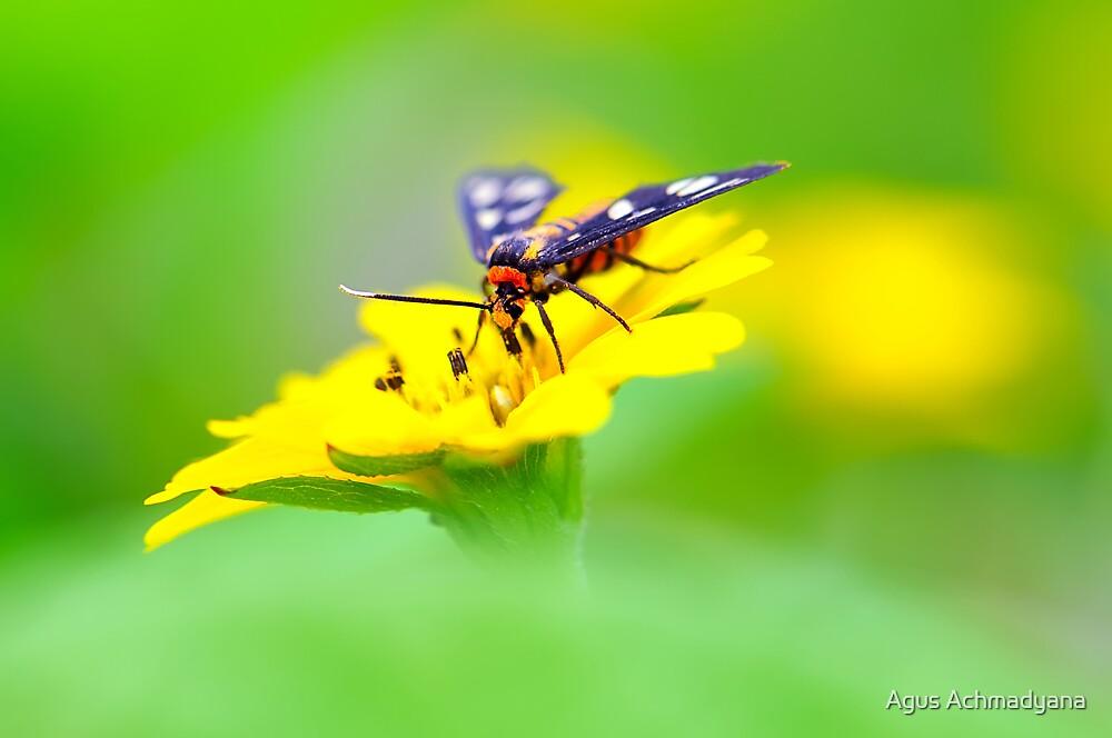 Forage on Flower by Agus Achmadyana