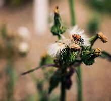 Ladybug by SalenaTai