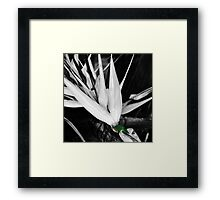 GREEN AND ORANGE BEETLE Framed Print