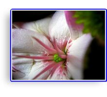 Pink and green lylium heart Canvas Print
