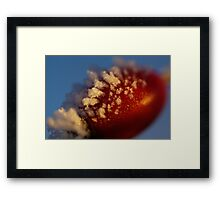 Red Berry In A Golden Sunset Framed Print