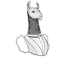 Lady Llama Photographic Print