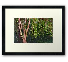 Weeping Willow In The Rain Framed Print