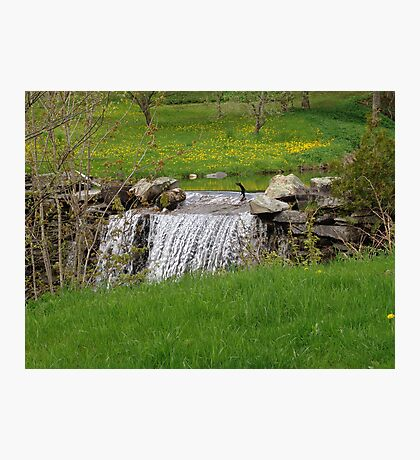 Dandelion Falls Photographic Print