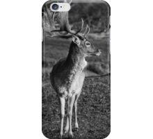 Young Deer iPhone Case/Skin