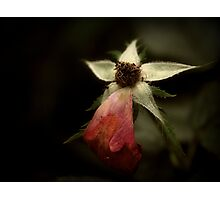 The Frail Duration Of A Flower Photographic Print