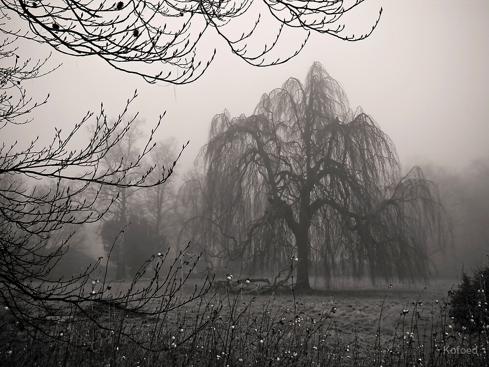 Misty Willow by Kofoed
