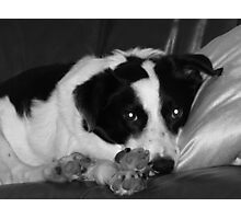 portrait of a woofy Photographic Print