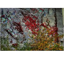 Northcountry Ode to Pollock Photographic Print