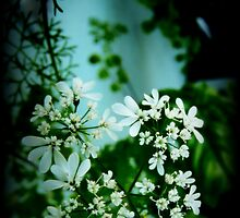 Cilantro Blossoms by AutismMom2