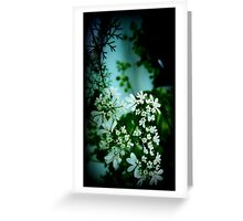 Cilantro Blossoms Greeting Card