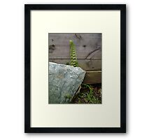 Fern and Rock Framed Print