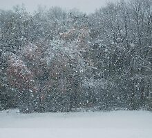Fall Snowstorm by sarahshanely