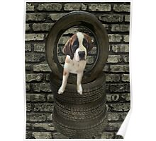 SOMETIME ONE TIRES OF THE OBSTACLES WE GO THROUGH IN LIFE...SAINT BERNARD PUPPY..PICTURE AND OR PRINTS ECT. Poster