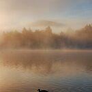duck in the fog by Luca Renoldi