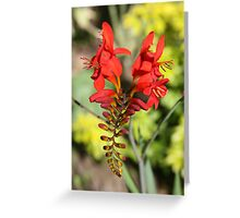 V...very Red Flower  Greeting Card